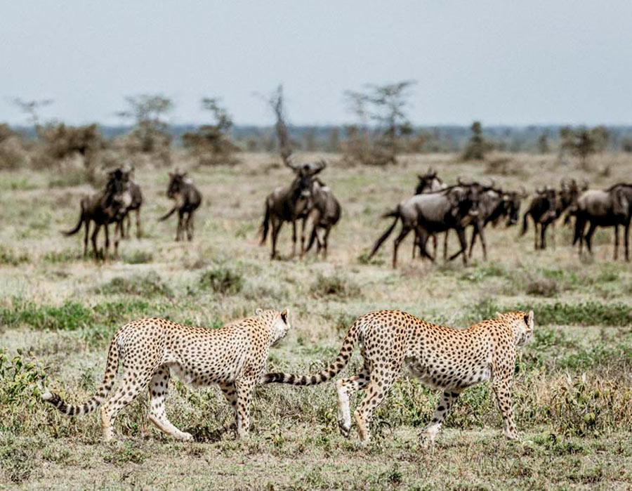 Scenic Adventures Africa